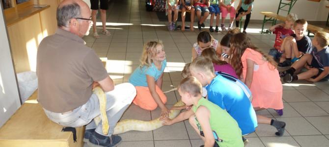 Reptilienschau in der Volksschule