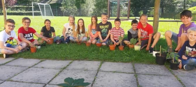 Abschluss des Paradeiserpflanzprojekts